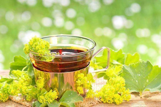 Herbata z przywrotnika